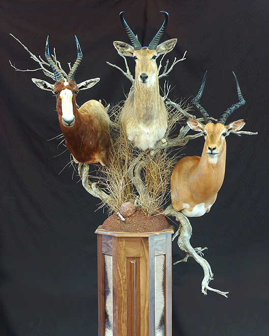 Safari Room Taxidermy Impala